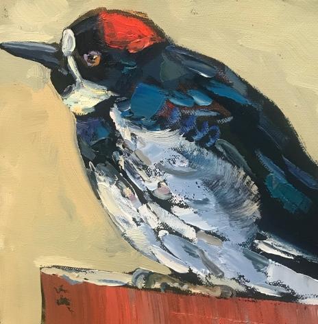 "Acorn Woodpecker 10"" x 10"" $200"