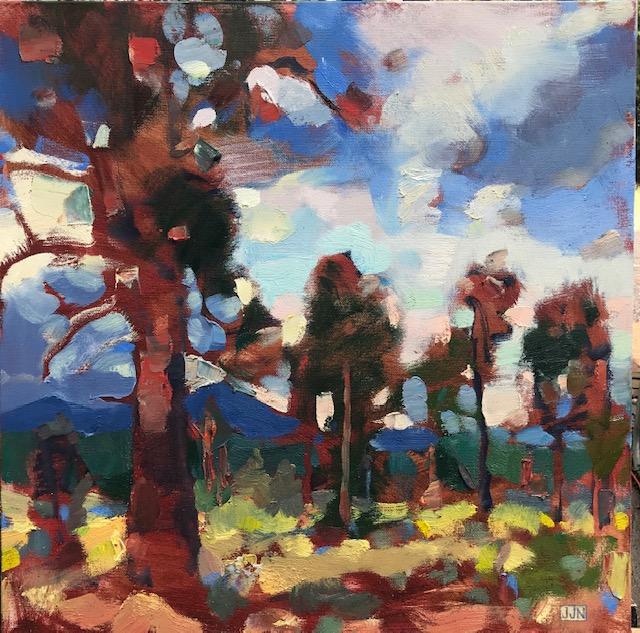 shevlin pines