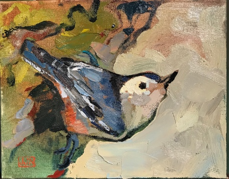 """White-Breasted Nuthatch 8""""10"""""""